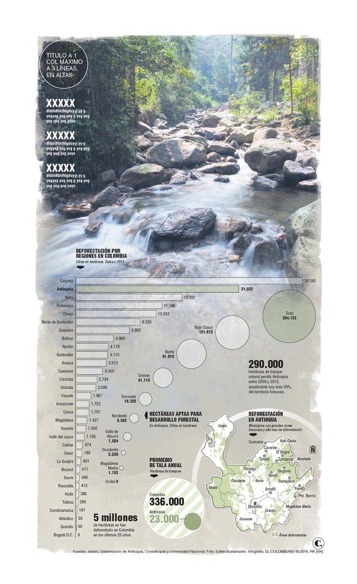 Antioquia suma fuerzas contra la deforestación