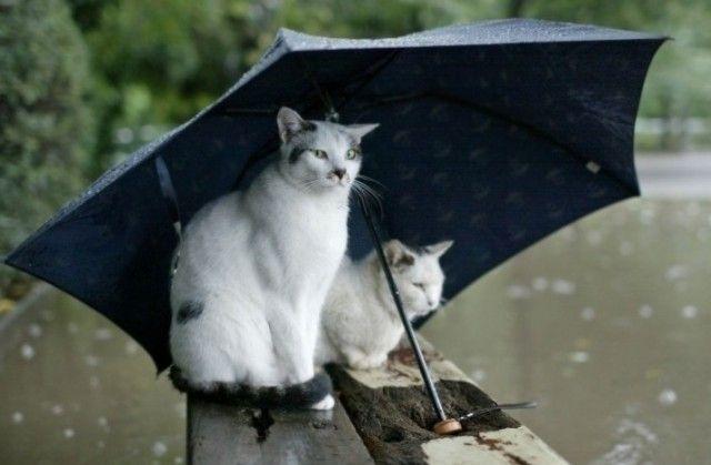 Itt esik ma sáros eső az országban! - https://www.hirmagazin.eu/itt-esik-ma-saros-eso-az-orszagban