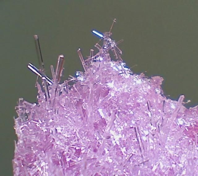 Grow a cupful of epsom salt crystal needles in your refrigerator. It's quick, easy, and safe.