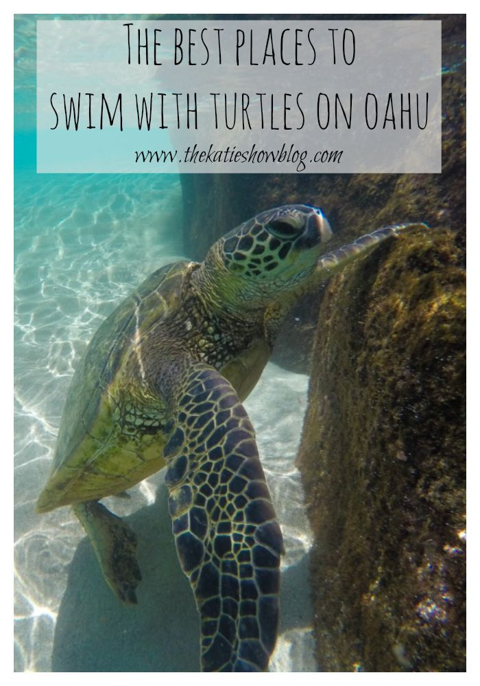 A guide to the best places to swim with Sea Turtles on Oahu, Hawaii.