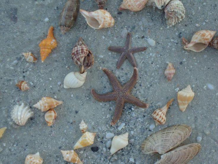 Shells on the Marco Island beach...