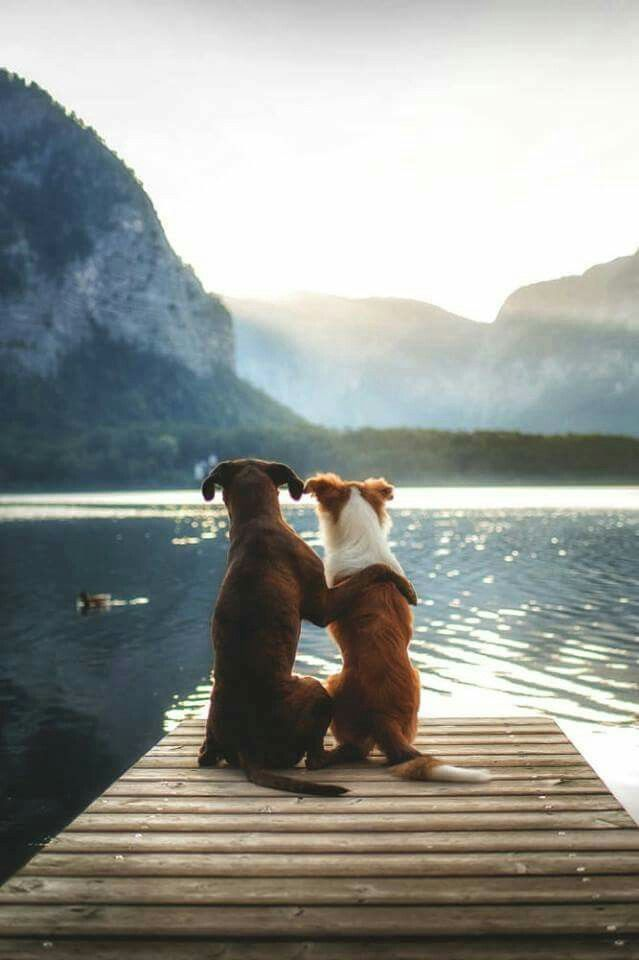 The brown dog is me, and the red and white one is you. :)