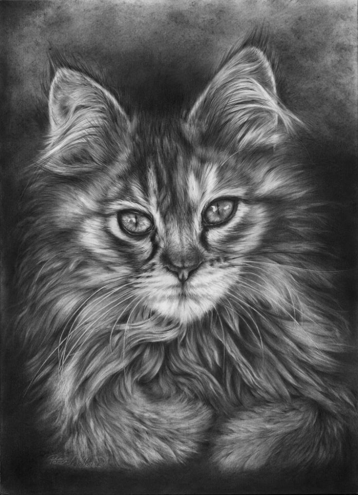 Best Land Pencil Images On Pinterest Pencil Drawings And - Powerful and intimate black white animal portraits by luke holas