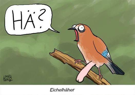 #eichelHÄher