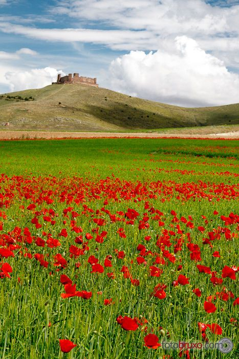 Castle over the poppies sea - Almonacid de Toledo, Spain