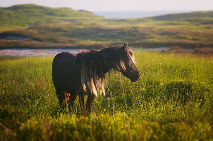 Atlantic Photo Supply - the blog  Rachelle takes us on a journey to Sable Island