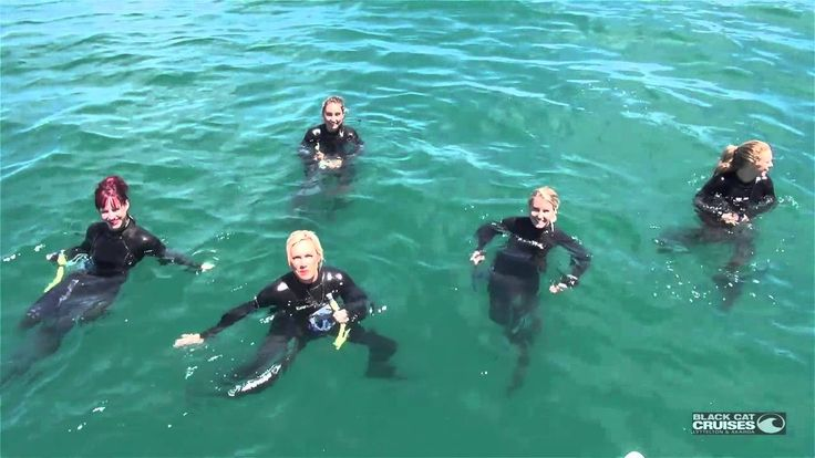 Cheerleaders Go Swimming With Dolphins In Akaroa New Zealand (+playlist)
