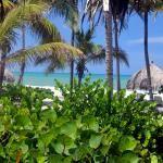 CRITICOS EN LA GUAJIRA : PALOMINO EL DESTINO INN DE AMERICARICA LATINA