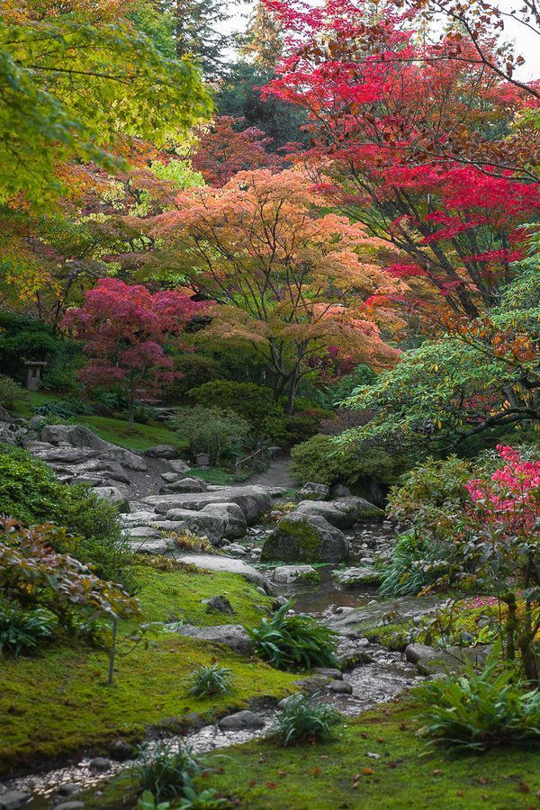I like the angles on this slope Fall Color in Seattles Japanese Garden | Lifesty…
