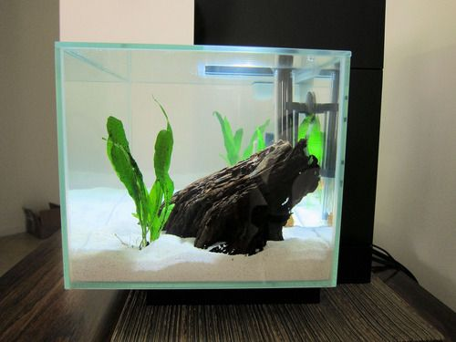 13 best betta fish tank mates images on pinterest fish for Easy aquarium fish