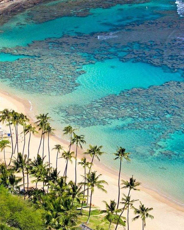 Honeymoon | Hanauma Bay, em Oahu, no Havai, é uma das praias mais populares e mais visitados fora de Waikiki e as praias de North Shore. O motivo não são só as águas cristalinas e a areia, mas a grande variedade de vida marinha.  Com mais de 300 espécies de peixes havaianos vivendo sobre os recifes de corais rasos, Hanauma Bay é um dos melhores lugares para fazer snorkeling. #icasei #wedding #casamento #luademel #honeymoon #destinationwedding#hawaii#havai#hanaumabay#oahu