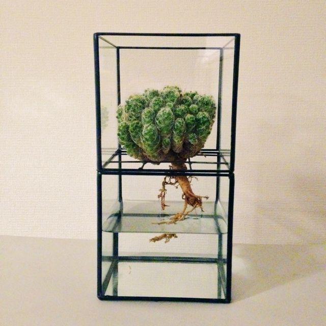 Atsushiさんの、植物,アート,テラリウム,水栽培,痺れるデザイン,仙人掌,RoomClip賞,TERRA,いいもの,理系雑貨,理系インテリア,のお部屋写真
