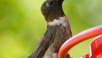 How to Make Hummingbird Liquid