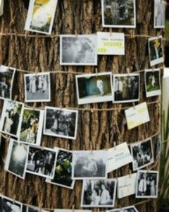 picture tree