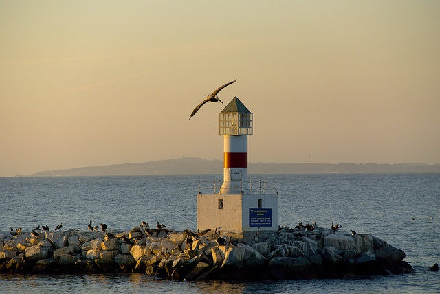 Faro Higuerillas, Viña del Mar, Chile. by Alfredoilde, via Flickr
