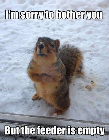This happened to us once when I was growing up. The squirrel climbed up the wood part of the door and tapped on the door window while we were eating. My mom always fed the squirrels. I think at the time she had been giving them peanuts in the shell. The squirrel wanted more!