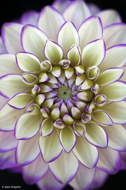 livrer des fleurs 18 #fleurs #bouquet