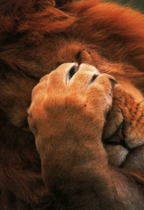 Lion: Now just give me a moment to think this out