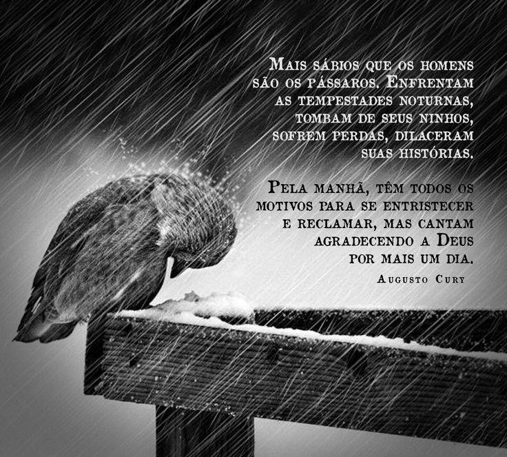Mais sábios que os homens são os pássaros.... Augusto Cury