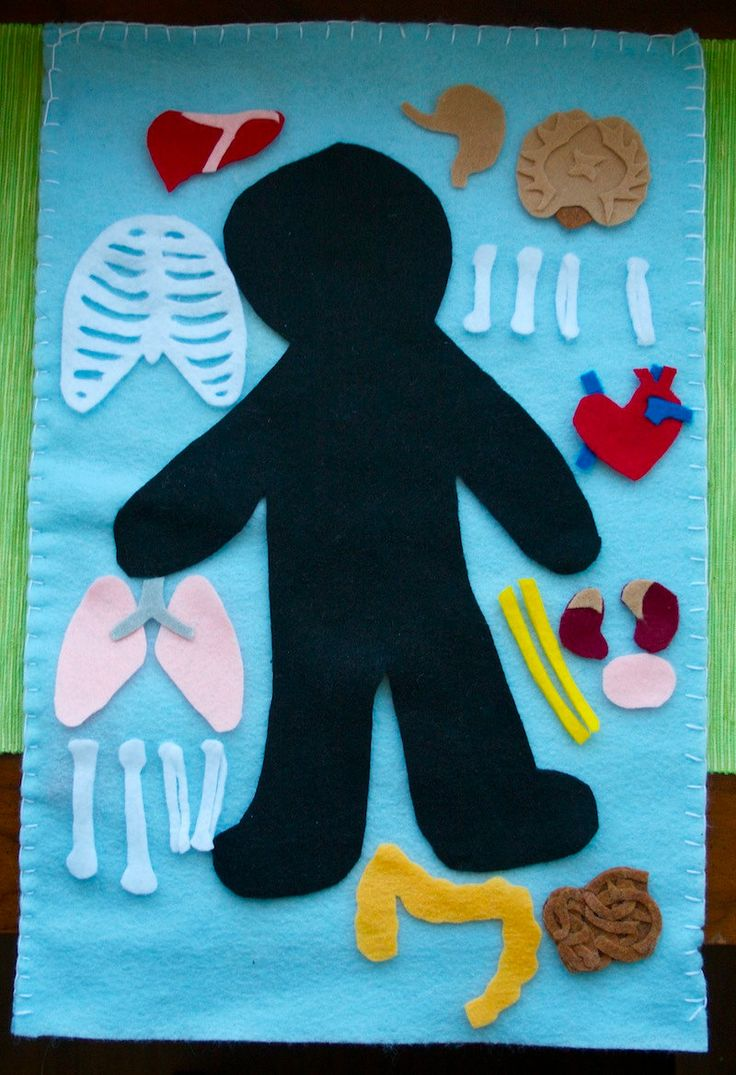 Human anatomy felt board! Do for animal science instead.
