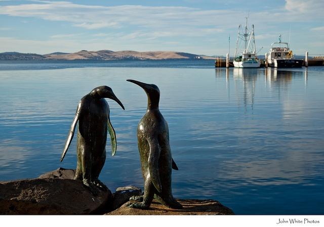 Waterfront. Hobart. Tasmania by john white photos, via Flickr