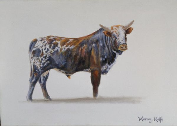 Nguni Bull Mpundzu oil painting by Murray Ralfe www.nguniart.co.za