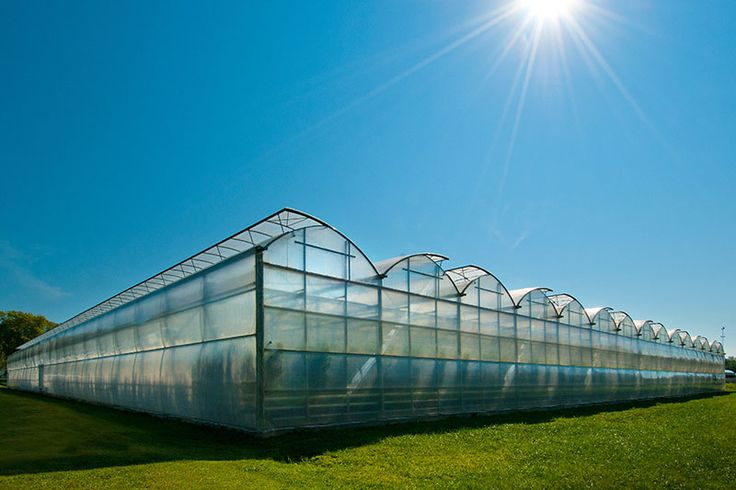 Hydroponic Greenhouse Business Plan