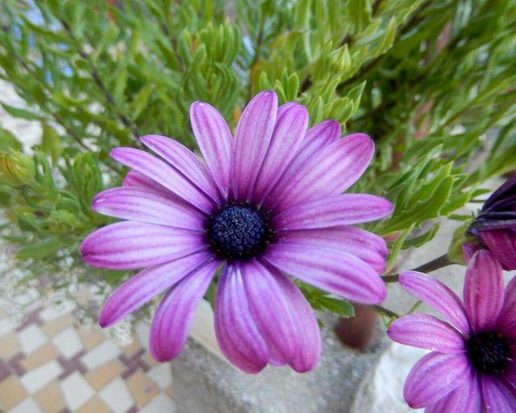 Cseppecske virág