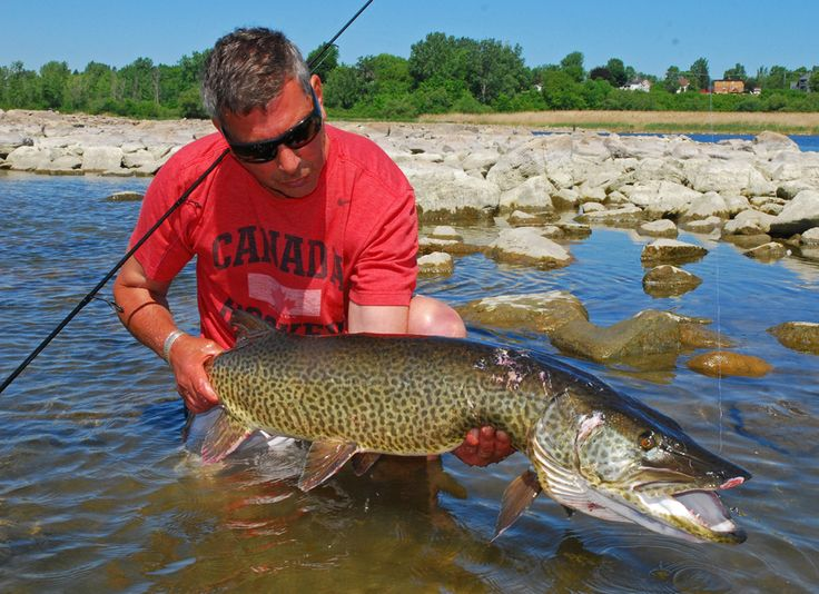 200 Best Images About River Monsters On Pinterest Lake