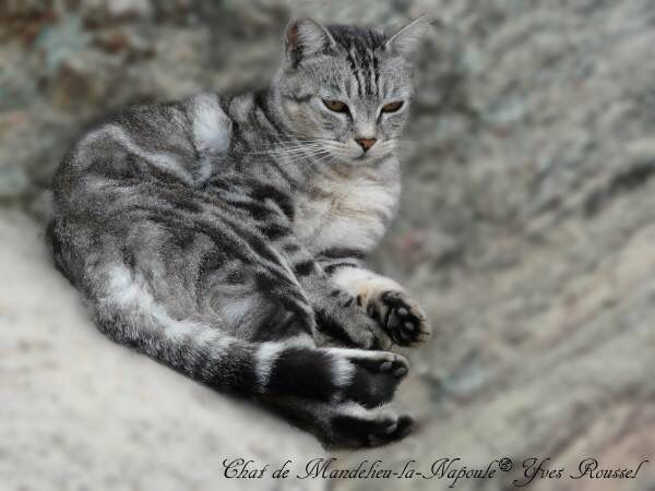 Cat of Mandelieu-la-Napoule in the Alpes-Maritimes in France © Yves Roussel