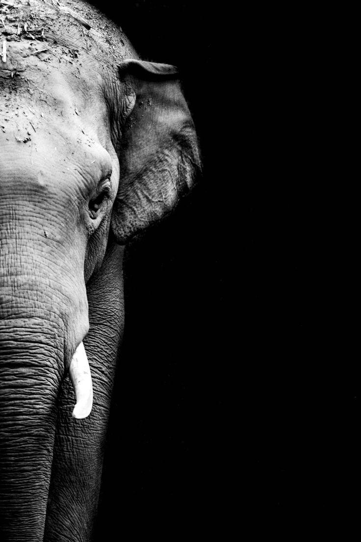 "macalaelliottphotography: "" Jungle Boy | Elephant Nature Park | Chiang Mai, Thailand  Macala Elliott Photography """