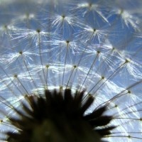 Do you think that each seed allows for a separate wish?
