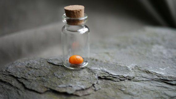 Animal de compagnie haricot cuit dans une bouteille par tinofbeans