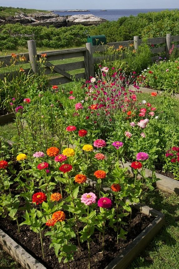 25 best ideas about cut flower garden on pinterest