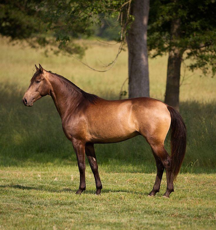 buckskin black singles Available colors: black, chocolate brown, gold, red, saddle tan, buckskin (smoke), turquoise, fuchsia pink,  (singles 72 or 25 pack 150 ft.