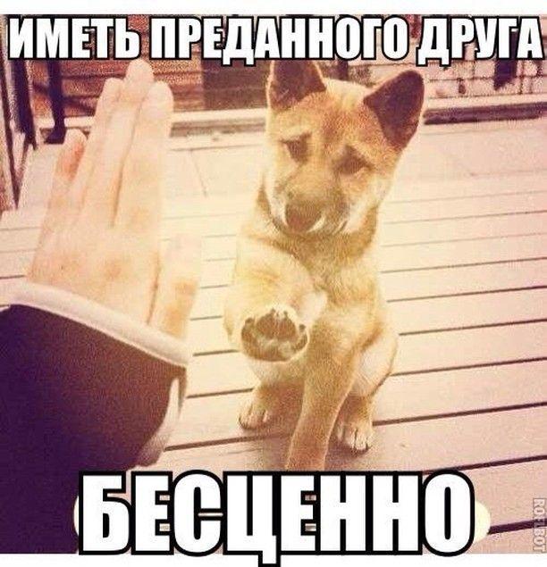 """просто фото """"Подпишись! Хорошее настроение на каждый день!  #юмор #смех #смешно#приколы #анекдоты #взаимныелайки#взаимныеподписки #подпискавзаимно#лайк #лайки #прикол #москва #россия#питер #крым #сочи #ростов#новосибирск #владивосток #поржать#картинки #весело #веселье #друзья#отмечайдрузей #ржака """" от deltamc May 28 2016 at 03:00PM"""