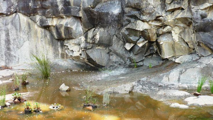 Tasmanian Bushland Gardens
