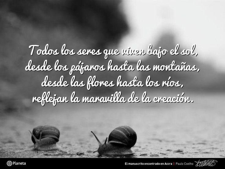 Frases De Paulo Coelho: 20 Best Frases De Paulo Coelho Para Compartir Images On