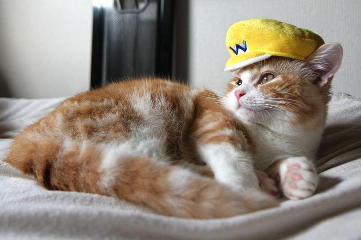 cosplay,cat,munchikin,kiku,Wario,cap,Mario Bros.
