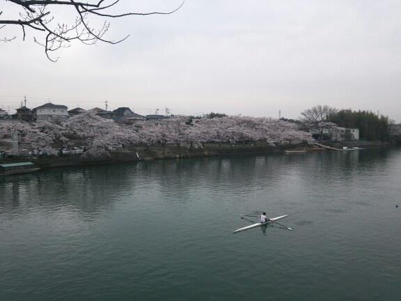 桜 その1 SAKURA 1