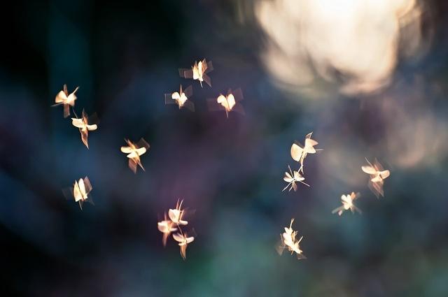 Le tombeau des lucioles by nahik, via Flickr