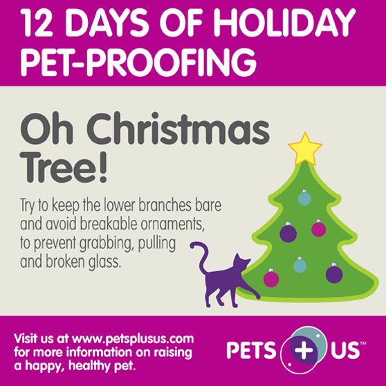 Get your house ready for the holidays with these pet-friendly tips! http://ow.ly/smf6q