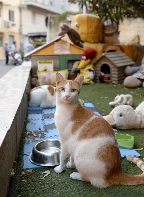 猫好きの聖地、70万匹が暮らす 地中海の島国・マルタ共和国