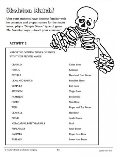 Skeleton Match: Word-Matching Page | Parents | Scholastic.com