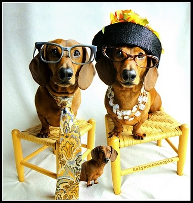too cute... one day I will get weenie dogs, and when I do, they will look like that.