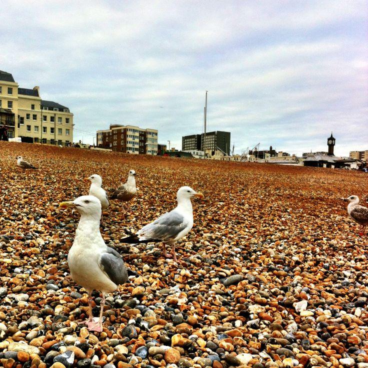 Brighton august 2013
