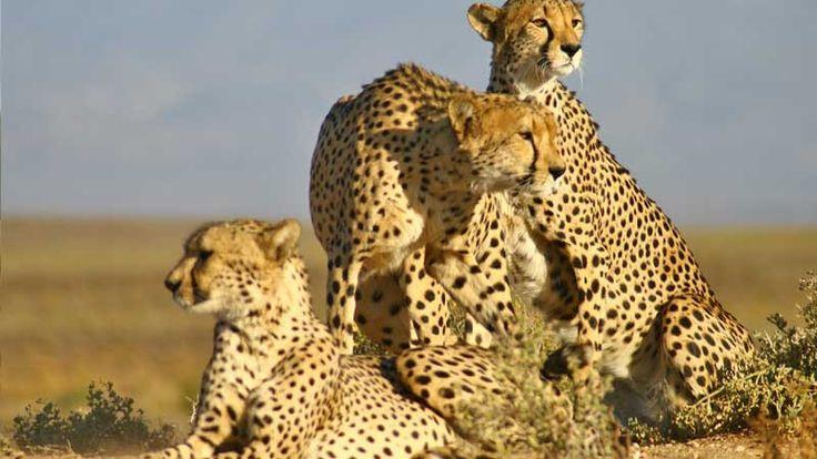 Inverdoorn Game Reserve, South Africa