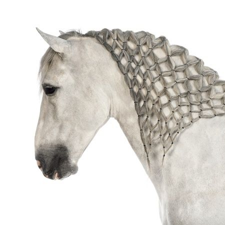 Check out this article on different ways to braid your horse's mane!