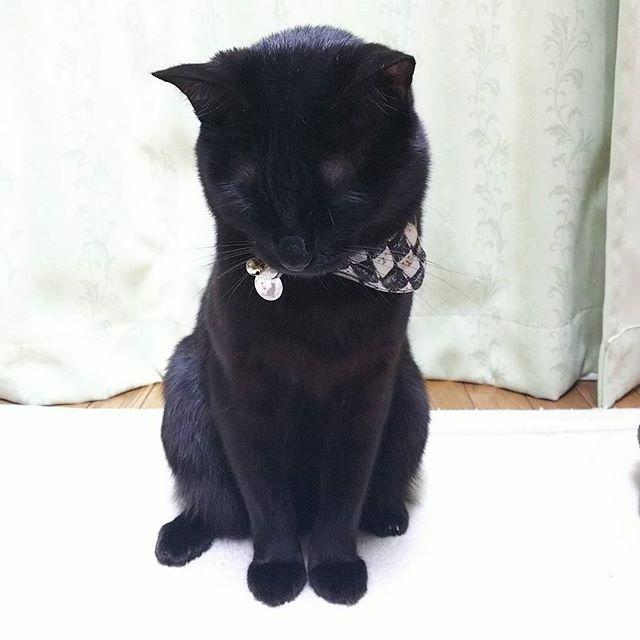 撮影日︰2017年11月8日 喪中ハガキ用のポポたん撮影。 新年のご挨拶はご遠慮させていただきます。ペコリm(__)mって感じです。 黒いからちょうどいいね😅 薄墨加工しなくちゃかな?  #猫モフー#ねこのきもち #re_petpark  #ネコダスケステーション #ねこ部 #ペットスマイル #ペコねこ部#みんねこ#picneko #ねこバカ#ねこまみれ #猫好きな人と繋がりたい #world_kawaii_cat  #愛猫#黒猫 #猫部 #にゃんすたぐらむ #ねこすたぐらむ #popo#ポポ#黒猫ポポたん