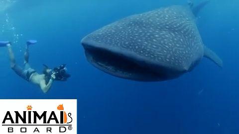 Wow beautiful whale ❤️